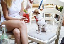 I chihuahua sono una delle razze di cani tra quelle di più piccola taglia