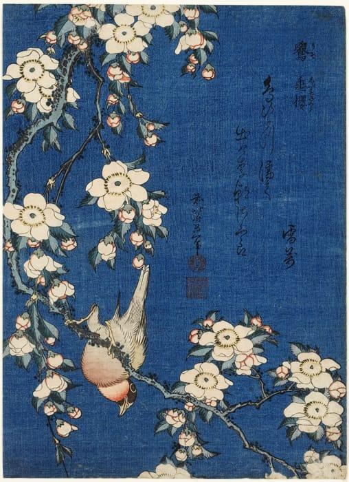 Katsushika Hokusai - Ciuffolotto e fiori di ciliegio piangenti (1834)