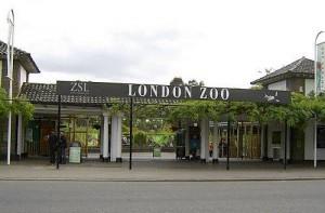 L'entrata del London Zoo