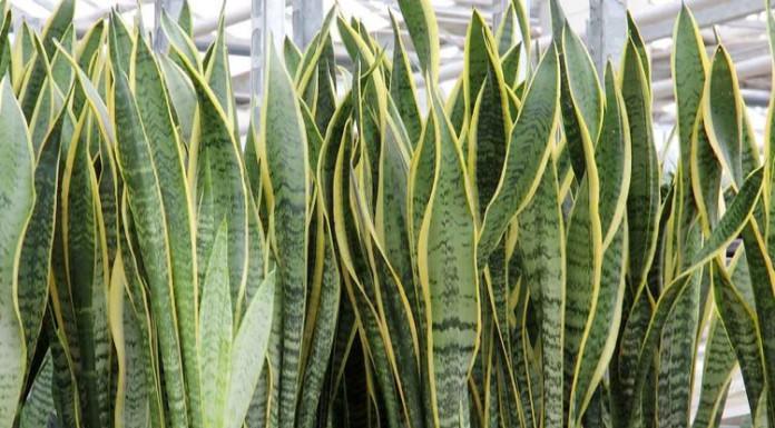 Guida alle più resistenti piante da appartamento