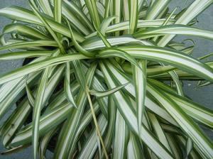 piante da appartamento nomi e foto