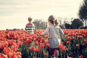 L'Olanda è uno dei paesi più ricchi d'Europa per PIL pro-capite, anche grazie ai suoi tulipani