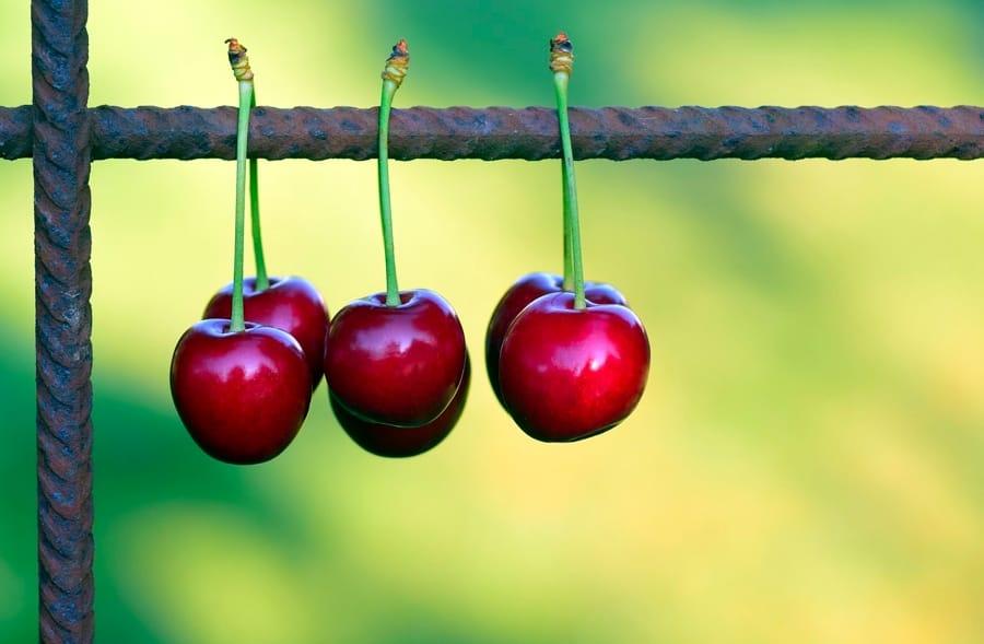 Le ciliegie, un super-frutto