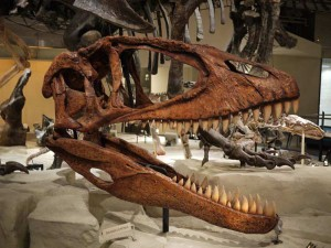 Il Carcharodontosauro (foto di Yoshikazu Takada via Flickr)