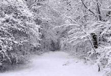 Cinque belle poesie sulla neve