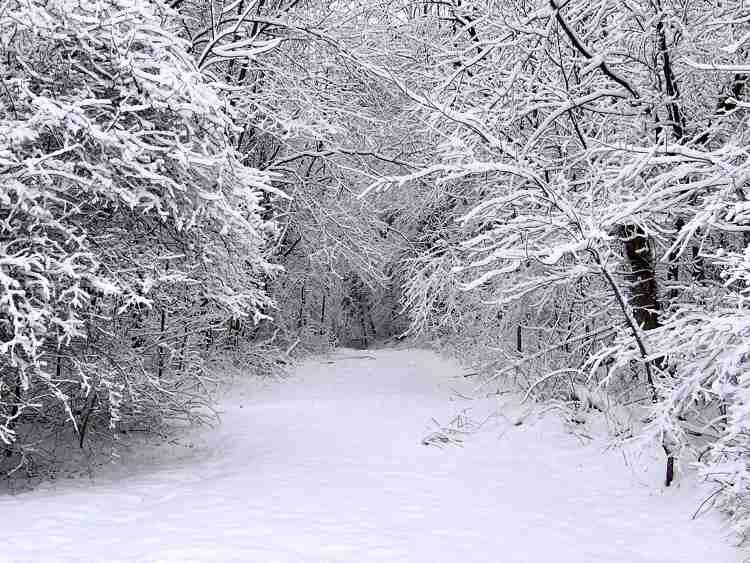 I nostri sondaggi legati all'inverno e alla neve