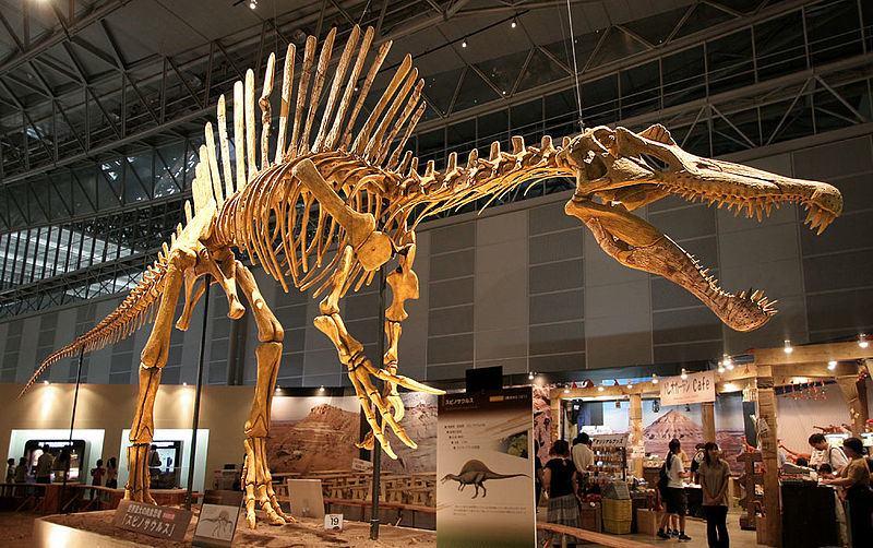 Uno scheletro di Spinosauro (foto di Kabacchi via Wikimedia Commons)