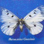 Parnassius Guccinii di Francesco Guccini