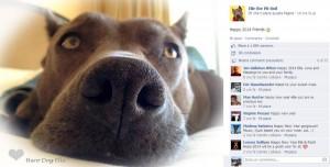 Elle, uno dei più famosi Pitbull usati per la pet therapy
