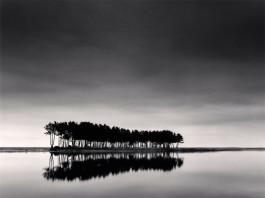 Pine Trees Study 1, Wolcheon, Gangwondo, Corea del Sud di Michael Kenna, uno dei più grandi fotografi di paesaggi