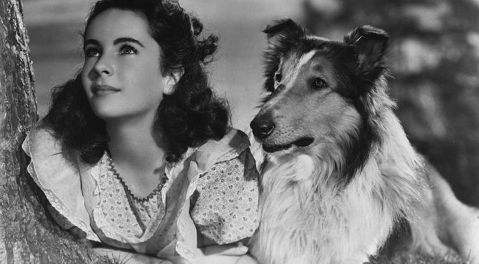 Lassie, uno dei più celebri cani attori, con una giovane Elizabeth Taylor