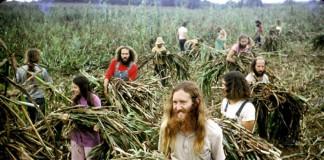 Attivisti al lavoro nei campi a The Farm