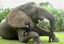 Un cane e un elefante nello spot Friends Furever di Android