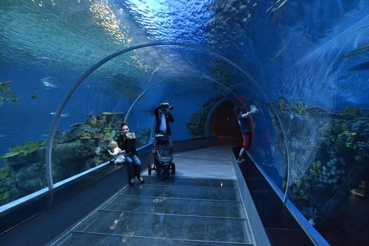 Il tunnel al Blue Planet Aquarium di Copenaghen (foto di Daniel via Flickr)