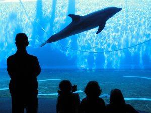 Spettatori all'acquario di Genova (foto di Roberto Ferrari via Flickr)