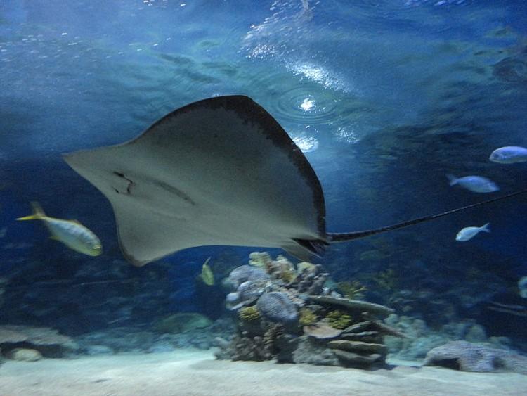 I cinque acquari pi grandi d 39 europa cinque cose belle for Pesce gatto acquario