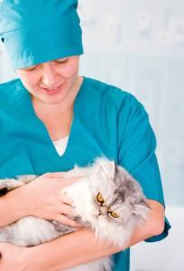 La sterilizzazione nei gatti