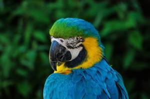 Un bellissimo esemplare di pappagallo