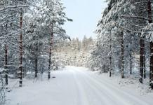 Il magico paesaggio dei boschi invernali (foto di Dave_S. via Flickr)