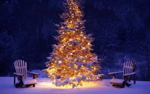 Tutte le curiosità e le tradizioni sull'Albero di Natale