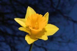 Scopriamo i segreti del linguaggio dei fiori