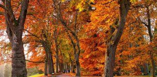Le più grandi poesie sull'autunno