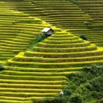 Le geometrie delle terrazze di riso