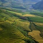 Panorama della valle di Mù Cang Chải in Vietnam