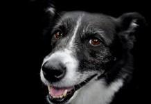 I cani sono spesso protagonisti di storie sorprendenti: ecco le migliori