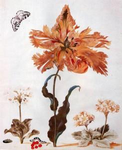 """Una tavola della """"Metamorfosi degli insetti del Suriname"""" di Maria Sibylla Merian"""