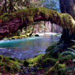 I curiosi scorci dell'Olympic National Park