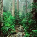 La foresta pluviale dell'Olympic