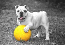 I migliori giochi da poter creare in casa per i vostri cani