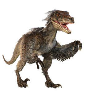 Un Velociraptor piumato