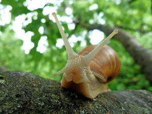 La lentezza delle lumache