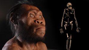 Una ricostruzione del possibile volto dell'Homo naledi