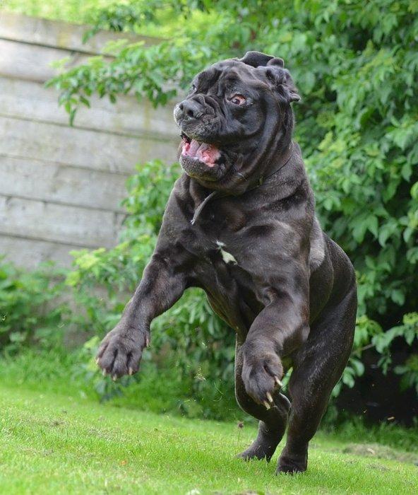 Cinque Ottimi Cani Da Guardia Cinque Cose Belle