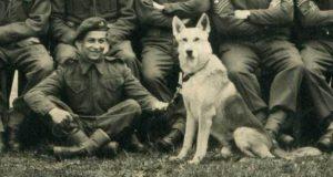 Glen, il cane paracadutista