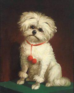 Un quadro che ritrae un cane Maltese dal pelo corto