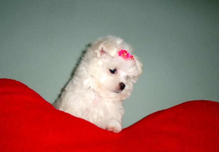 Cinque Bei Nomi Per Cani Femmina Cinque Cose Belle