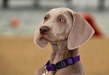 Qual è il migliore tra i nomi per cani maschi?