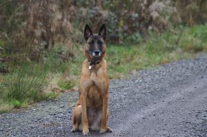 Un cane di quattro colori diversi (foto di Jolisoleil via Flickr)