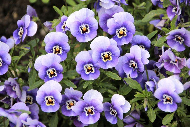 Le migliori e più emblematiche frasi sui fiori