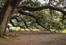 Alla scoperta dei più strani alberi del mondo