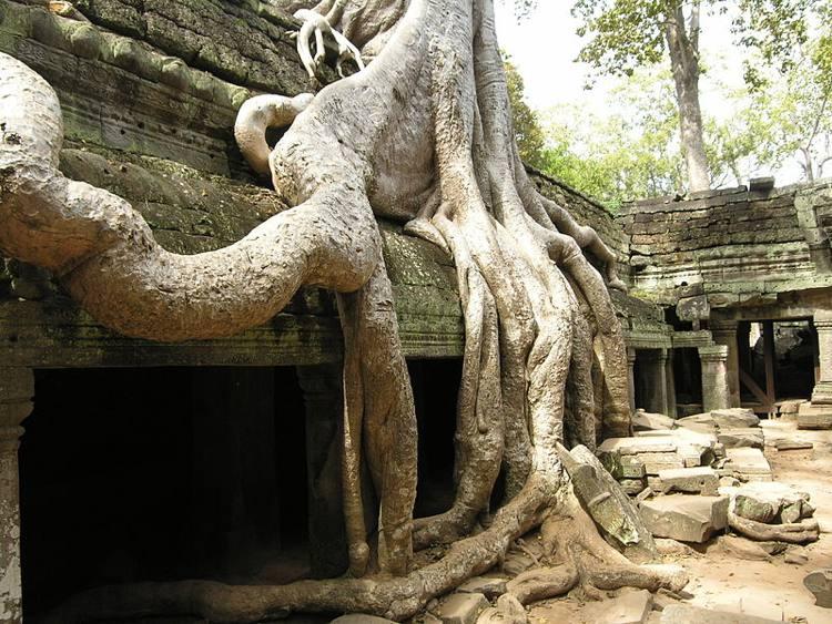 Un albero di Ta Phrom fotografato in Cambogia (foto dell'UNESCO)
