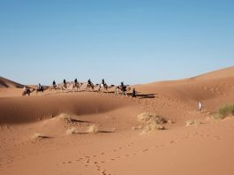 Alla scoperta del deserto e dei suoi animali più strani