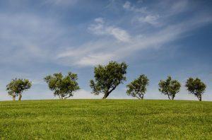 Un albero è un regalo che facciamo a tutto il mondo
