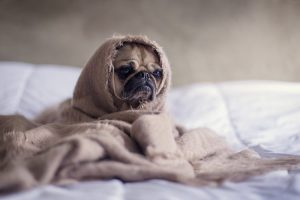 Una coperta può rivelarsi un regalo di Natale indispensabile per cani e persone