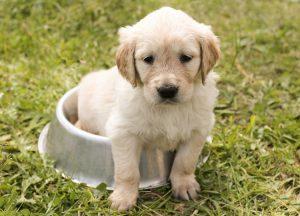 I cuccioli sono sempre un bel regalo, anche a distanza