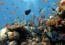 Alla scoperta di alcuni dei pesci più belli esistenti